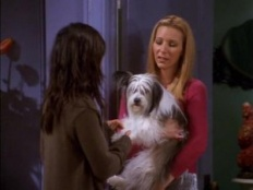Friends 07x08 : The One Where Chandler Doesn't Like Dogs- Seriesaddict